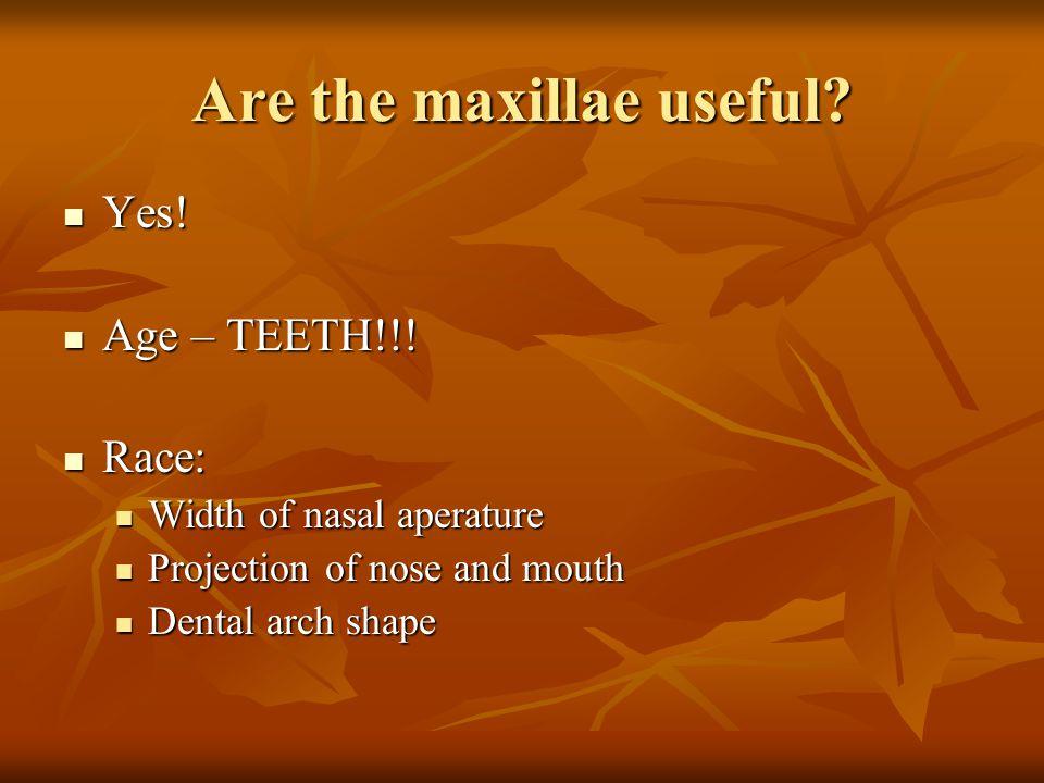 Are the maxillae useful