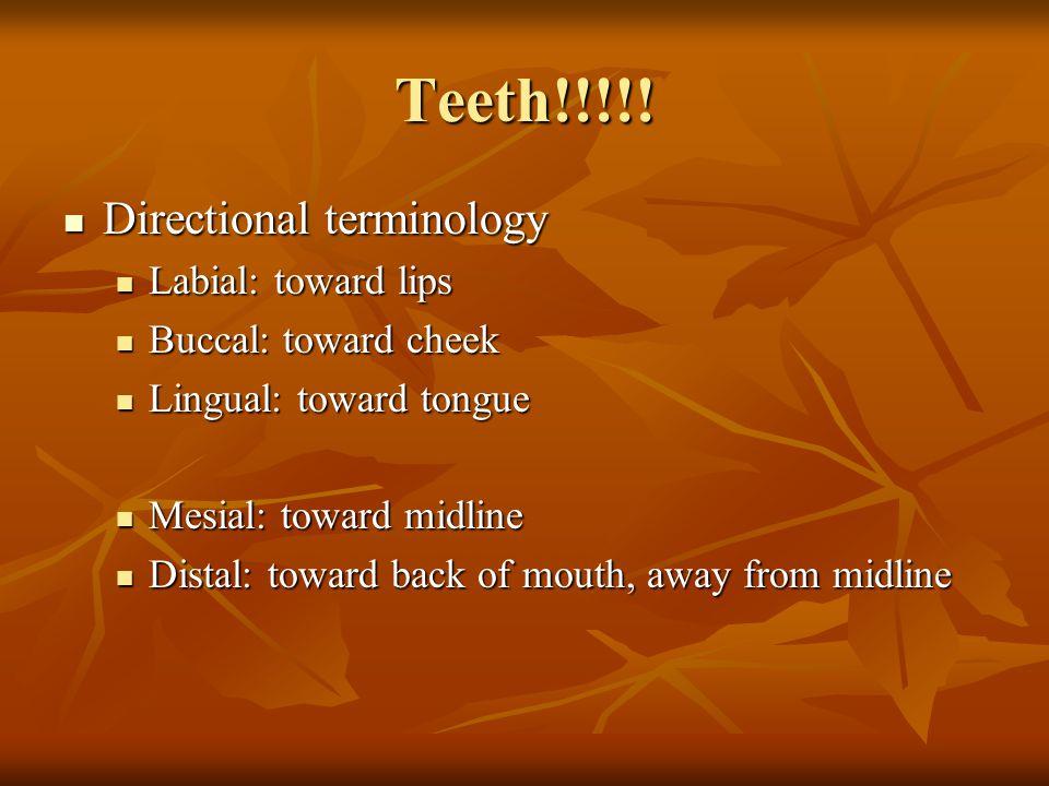 Teeth!!!!! Directional terminology Labial: toward lips