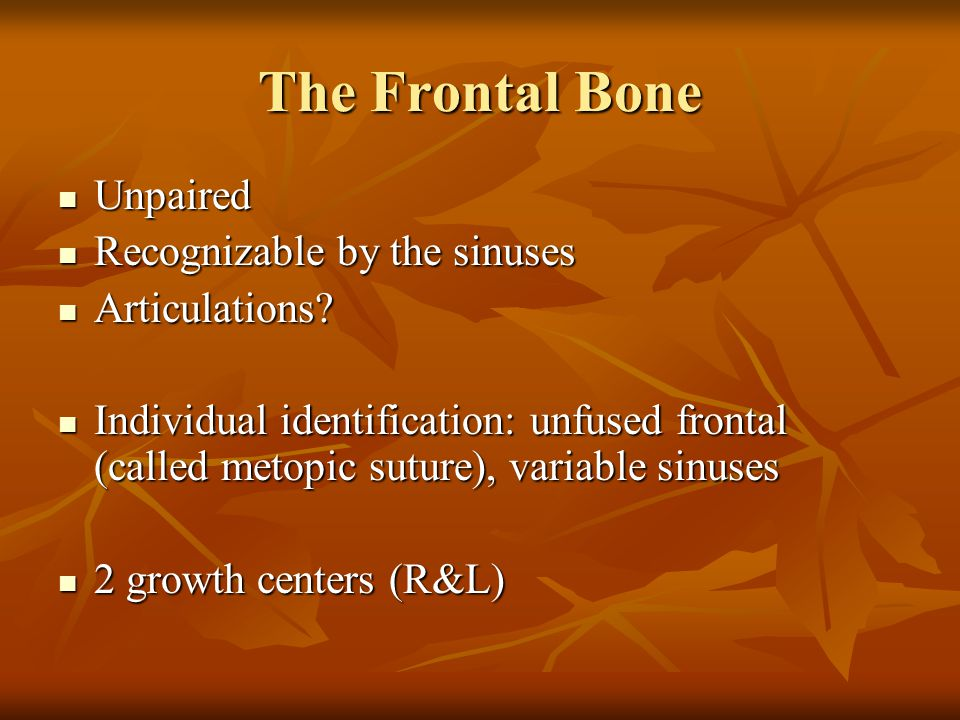 The Frontal Bone Unpaired Recognizable by the sinuses Articulations