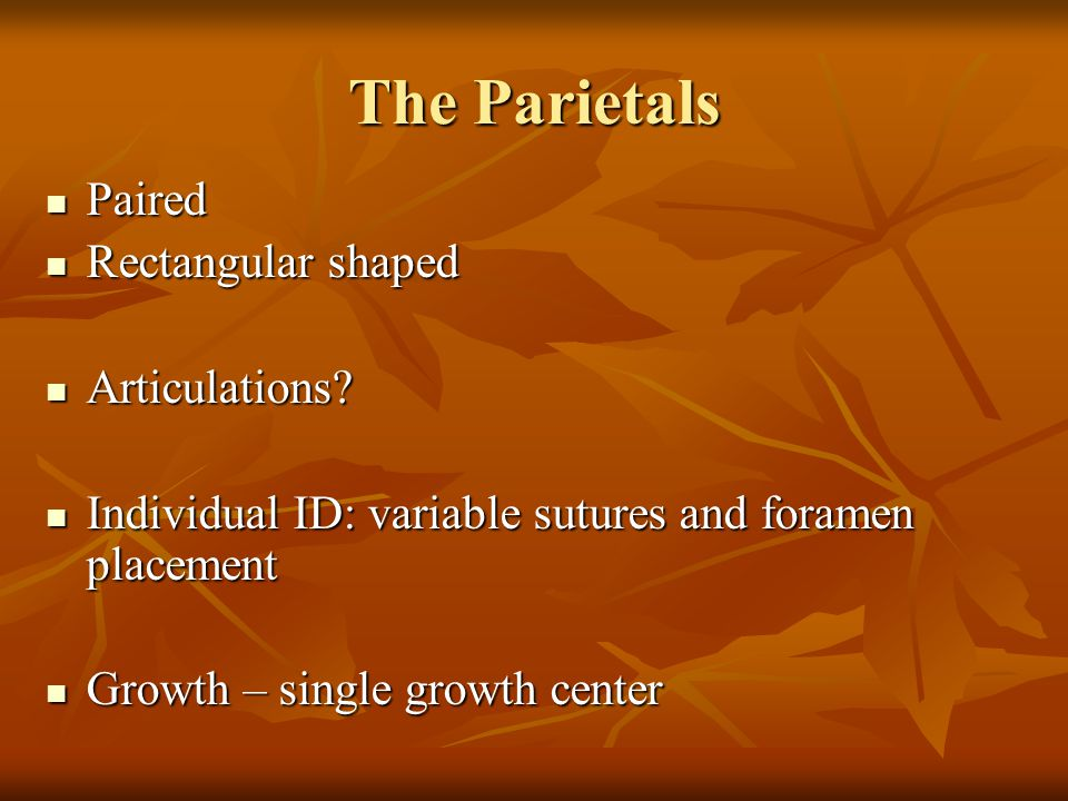 The Parietals Paired Rectangular shaped Articulations