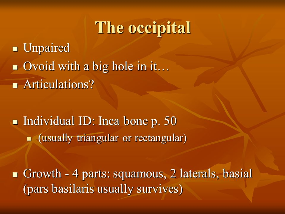 The occipital Unpaired Ovoid with a big hole in it… Articulations