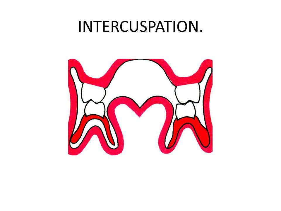 INTERCUSPATION.