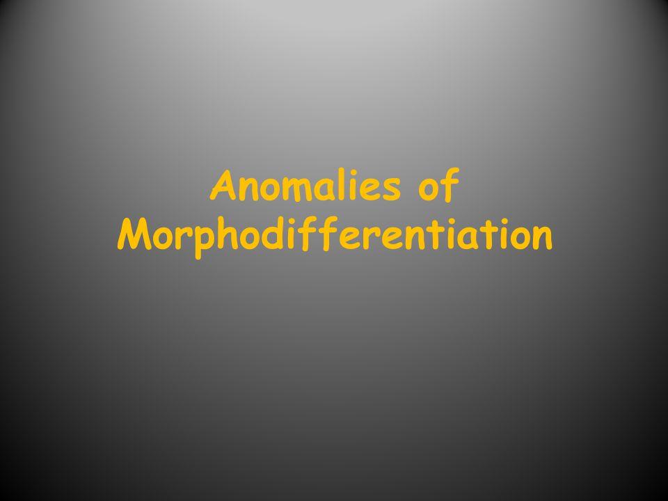 Anomalies of Morphodifferentiation