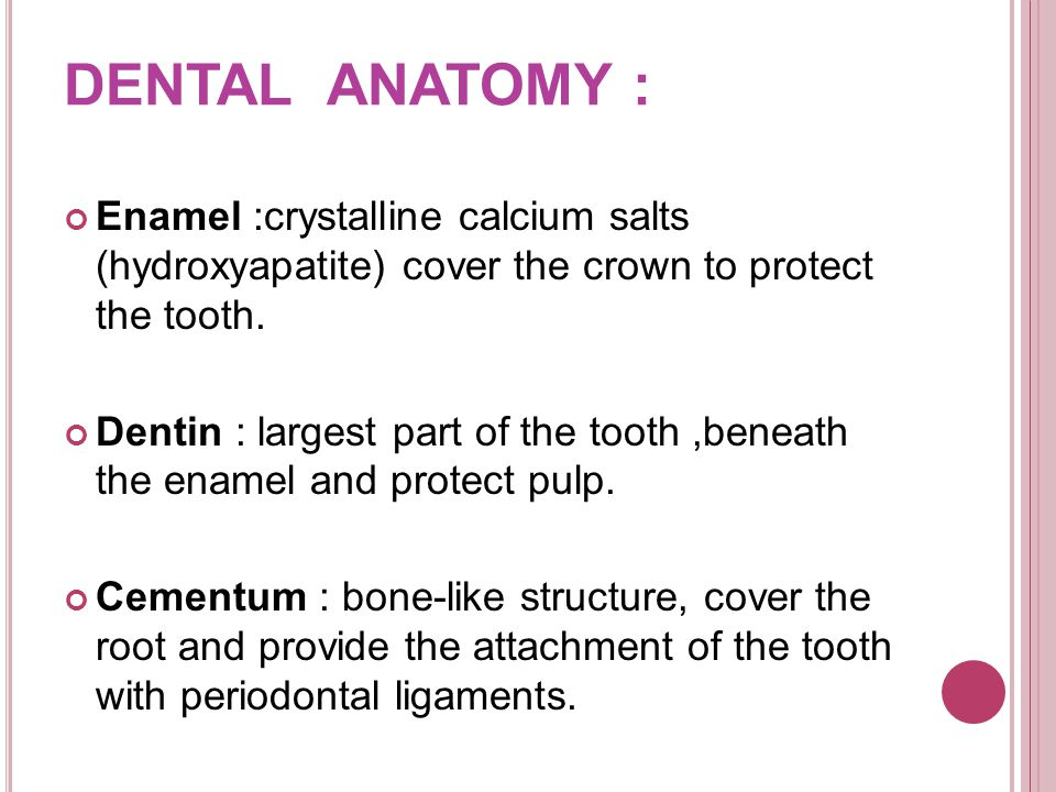 DENTAL ANATOMY : Enamel :crystalline calcium salts (hydroxyapatite) cover the crown to protect the tooth.