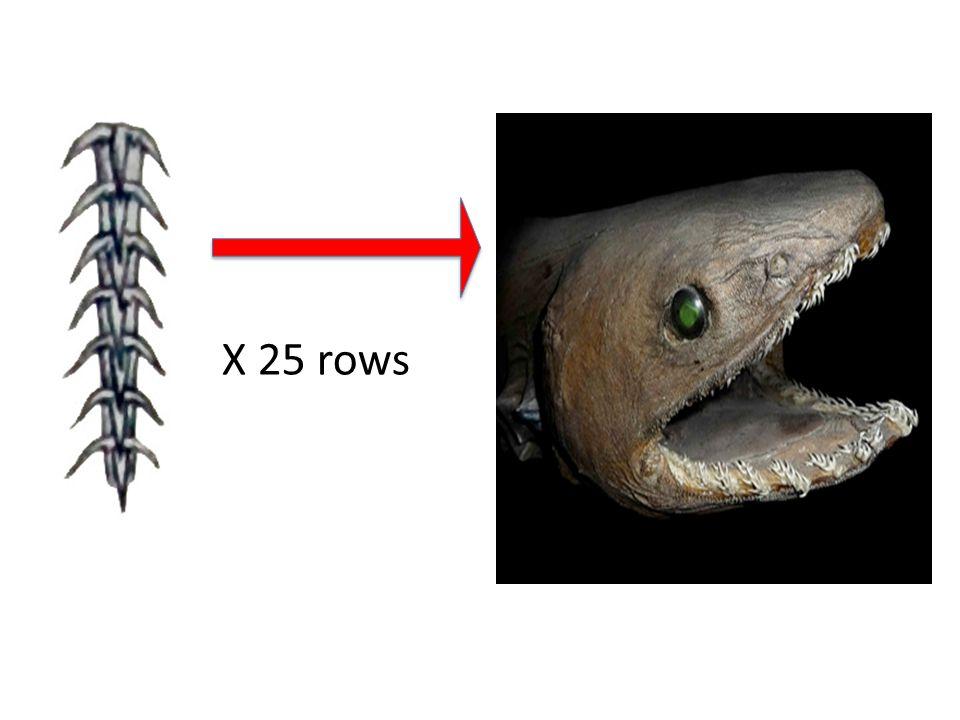 X 25 rows Left pic: http://www.earthrangers.com/wildwire/top-10/top-ten-unusual-sharks/