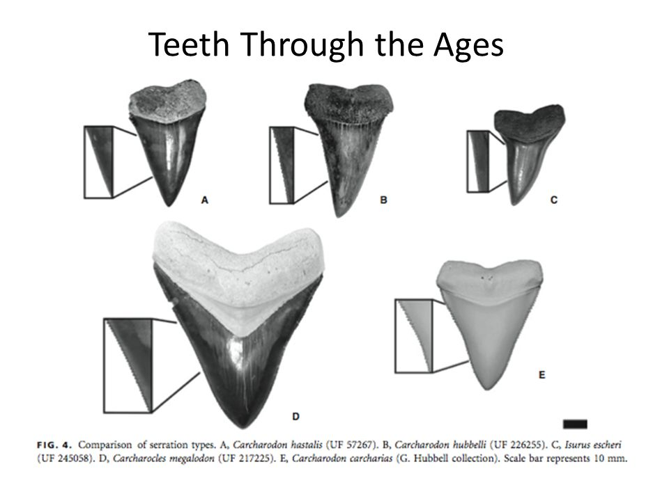 Teeth Through the Ages