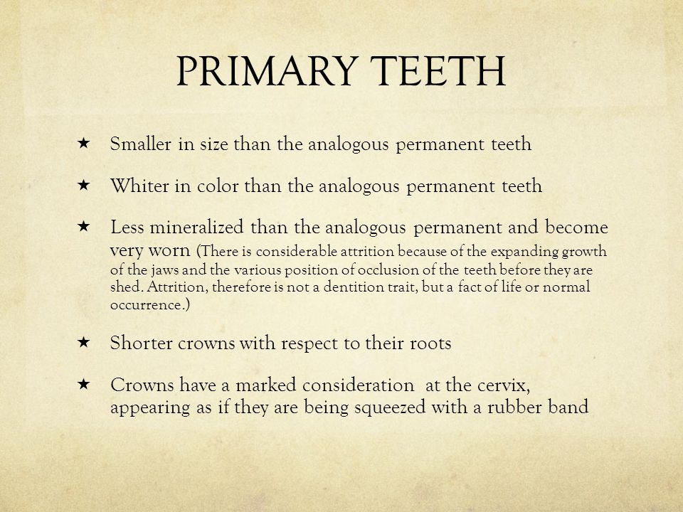 PRIMARY TEETH Smaller in size than the analogous permanent teeth