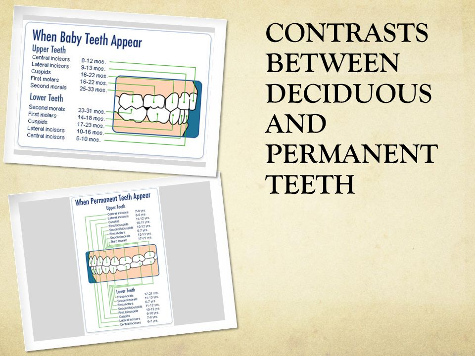 CONTRASTS BETWEEN DECIDUOUS AND PERMANENT TEETH