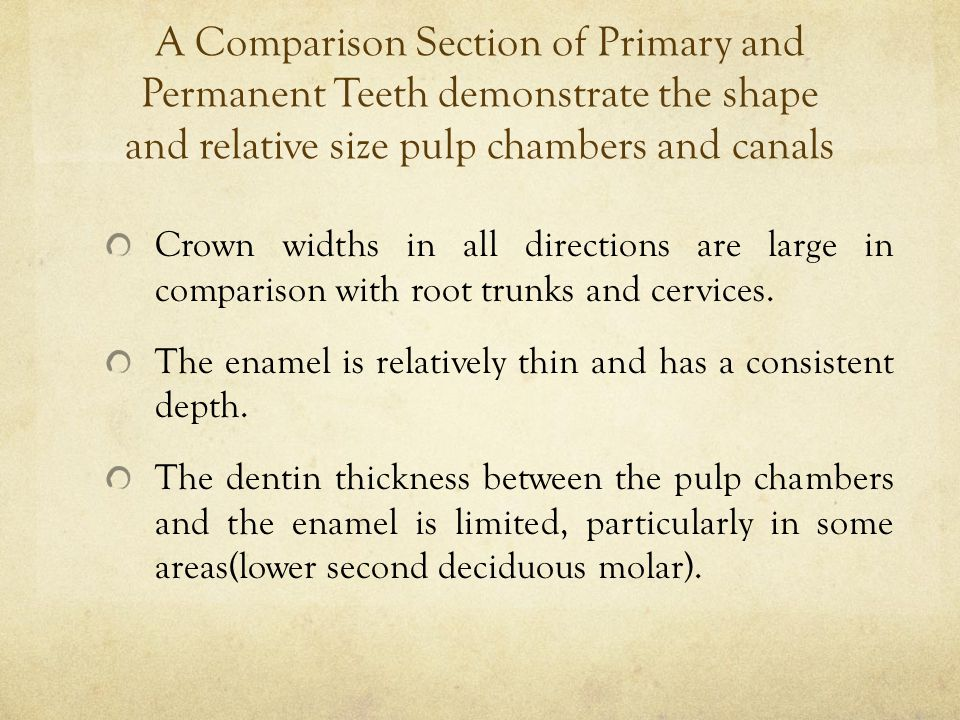 A Comparison Section of Primary and Permanent Teeth demonstrate the shape and relative size pulp chambers and canals