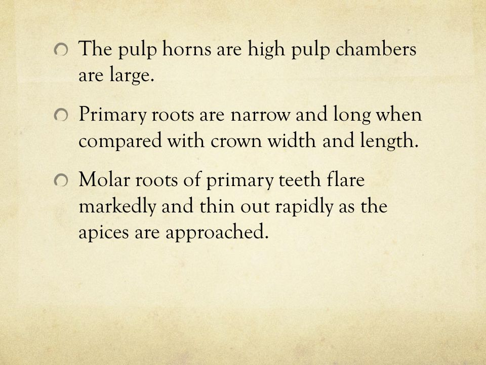 The pulp horns are high pulp chambers are large.