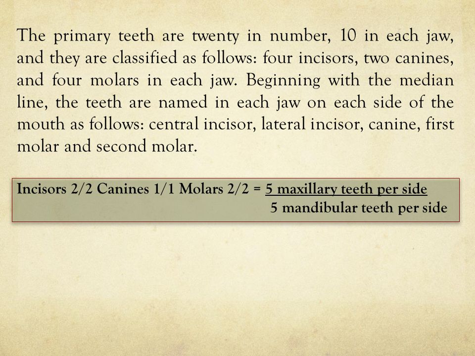 The primary teeth are twenty in number, 10 in each jaw, and they are classified as follows: four incisors, two canines, and four molars in each jaw. Beginning with the median line, the teeth are named in each jaw on each side of the mouth as follows: central incisor, lateral incisor, canine, first molar and second molar.
