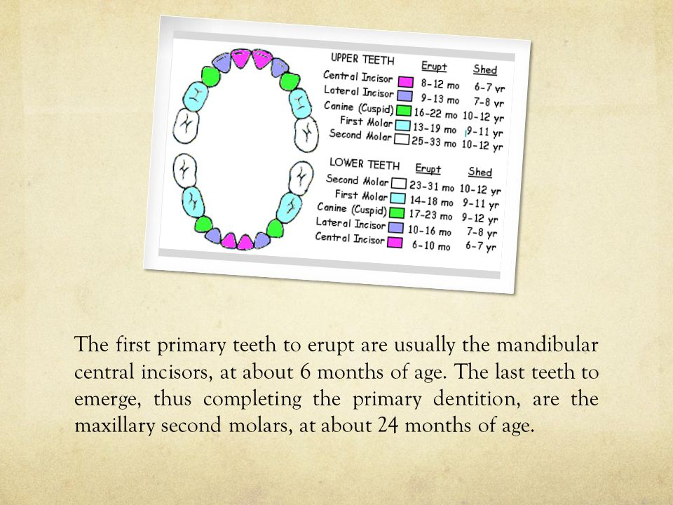 The first primary teeth to erupt are usually the mandibular central incisors, at about 6 months of age.