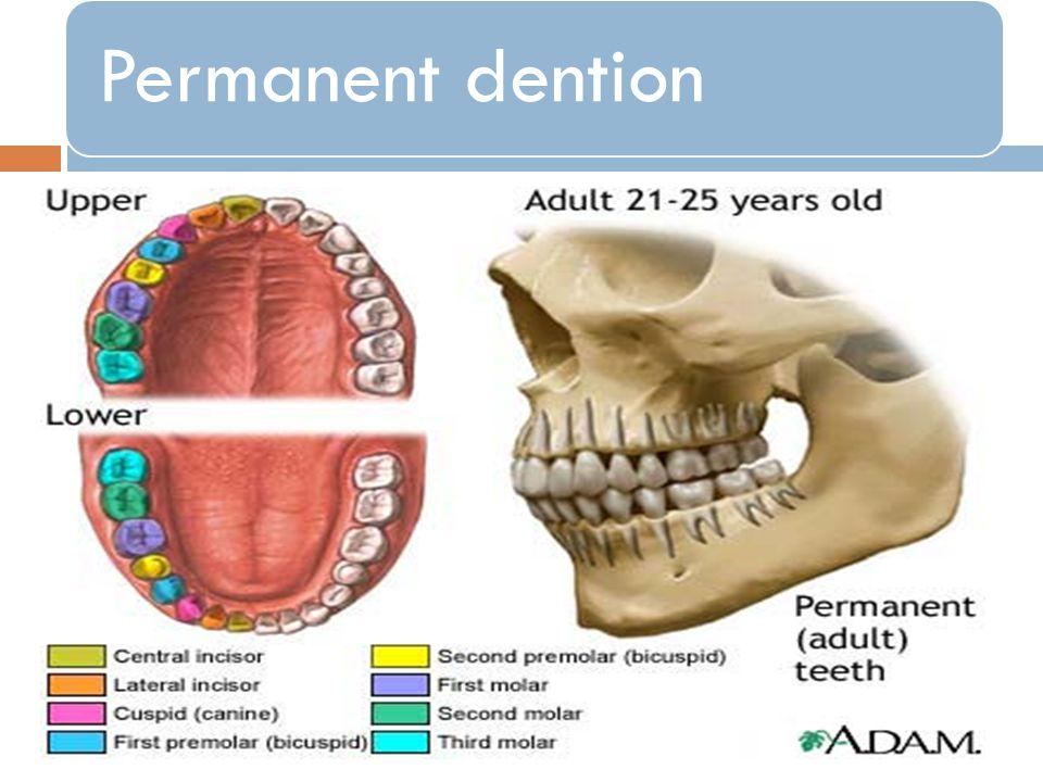 Permanent dention