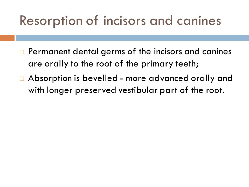 Resorption of incisors and canines