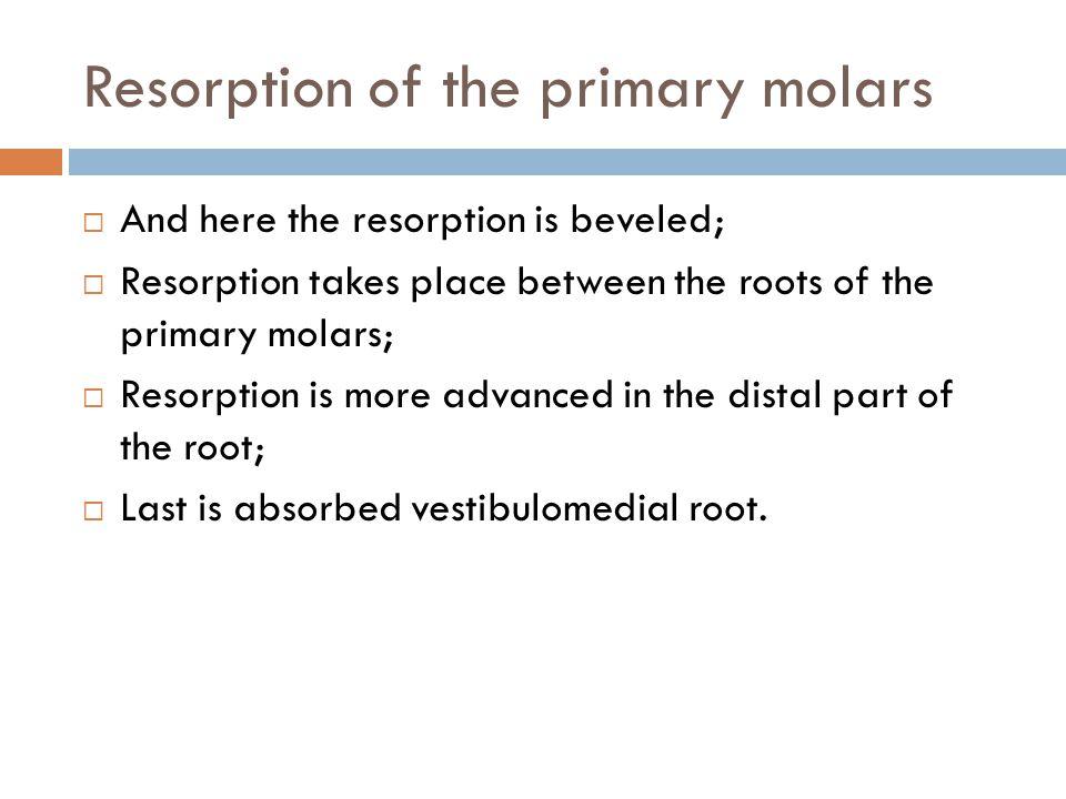 Resorption of the primary molars