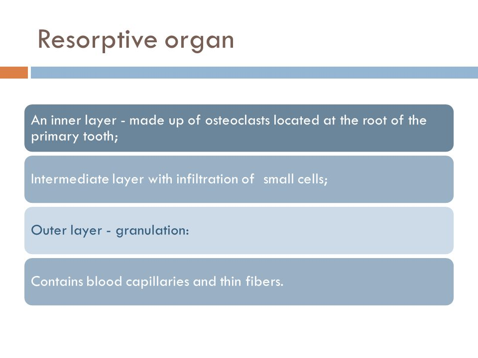 Resorptive organ An inner layer - made up of osteoclasts located at the root of the primary tooth;