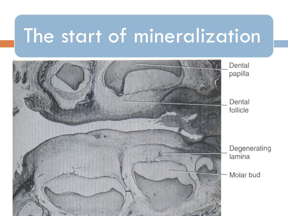 The start of mineralization