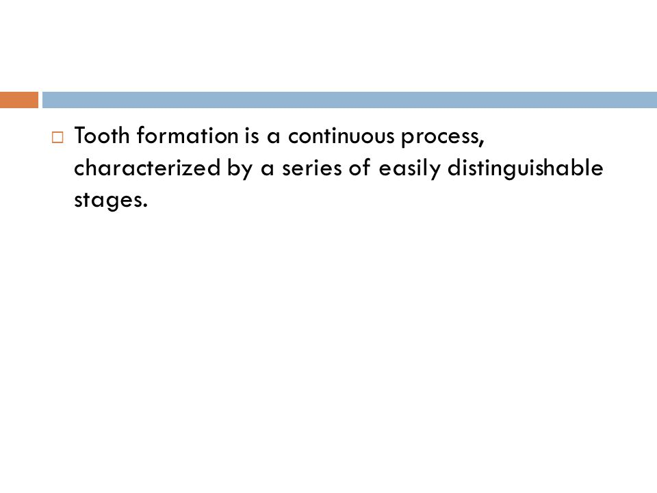 Tooth formation is a continuous process, characterized by a series of easily distinguishable stages.