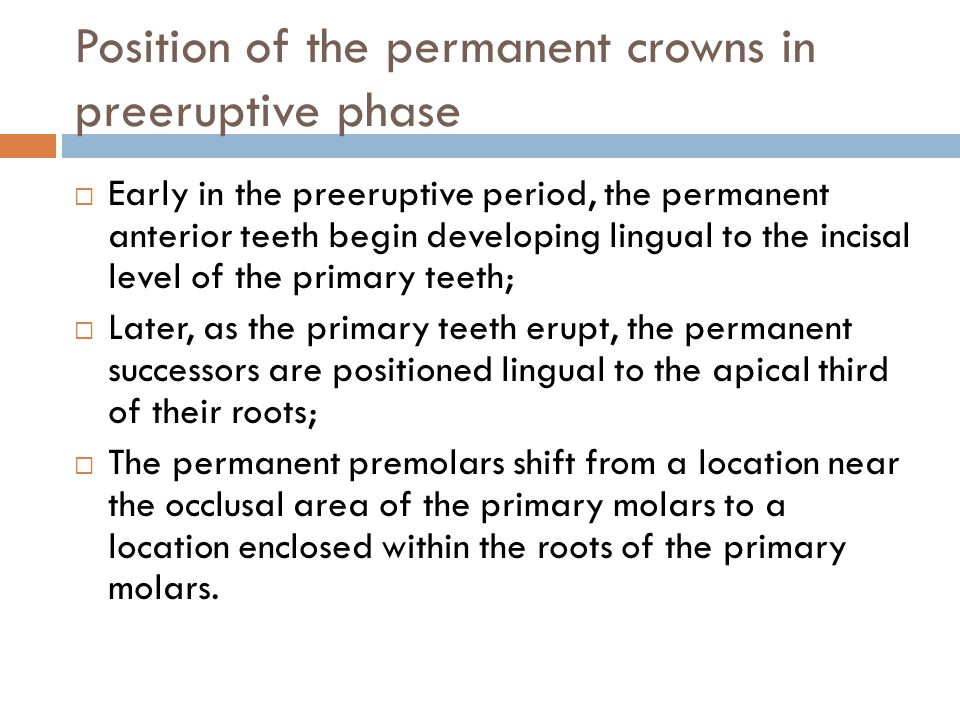 Position of the permanent crowns in preeruptive phase