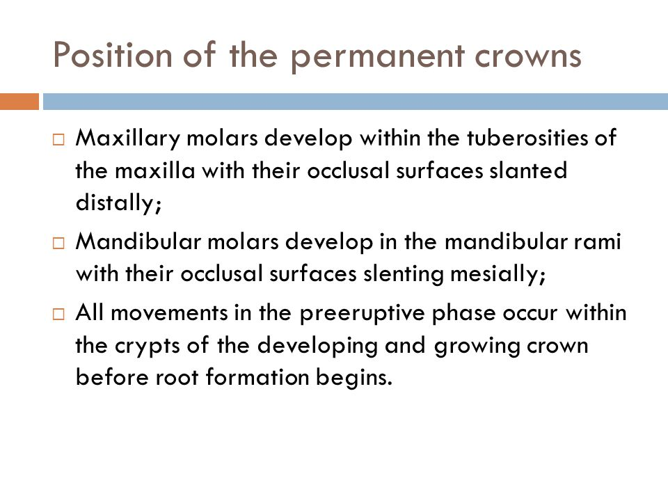 Position of the permanent crowns