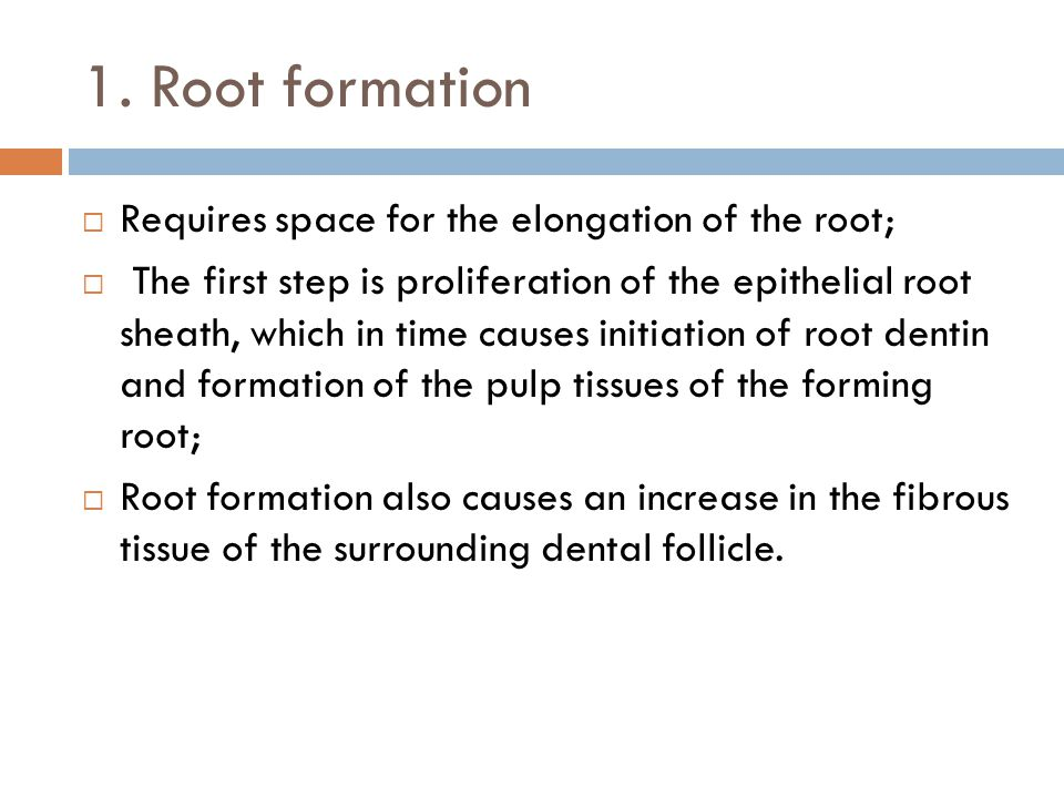 1. Root formation Requires space for the elongation of the root;