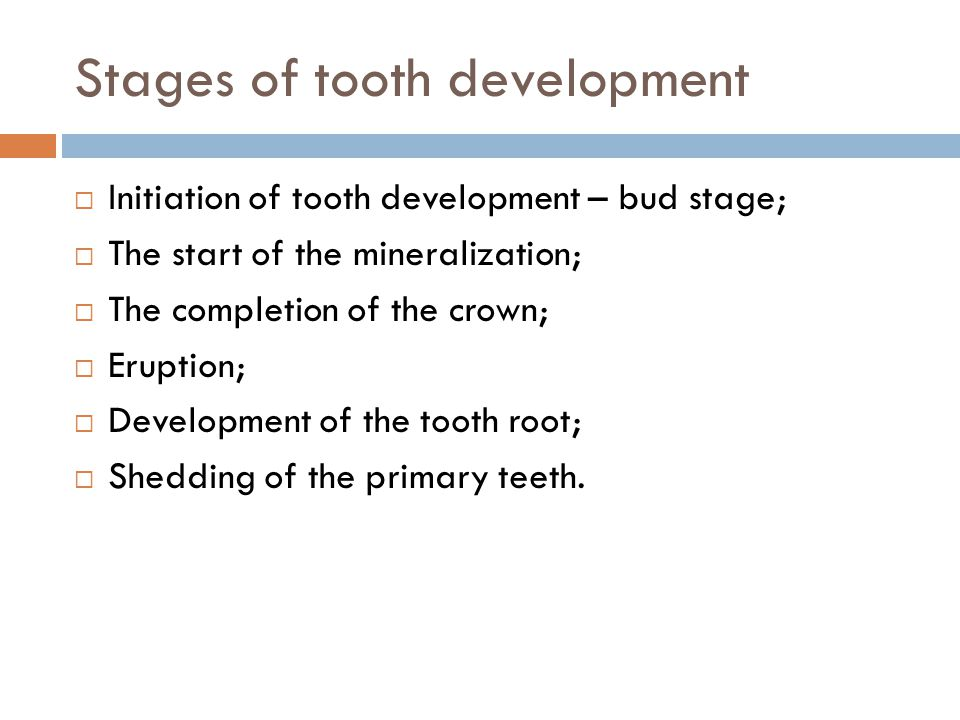Stages of tooth development