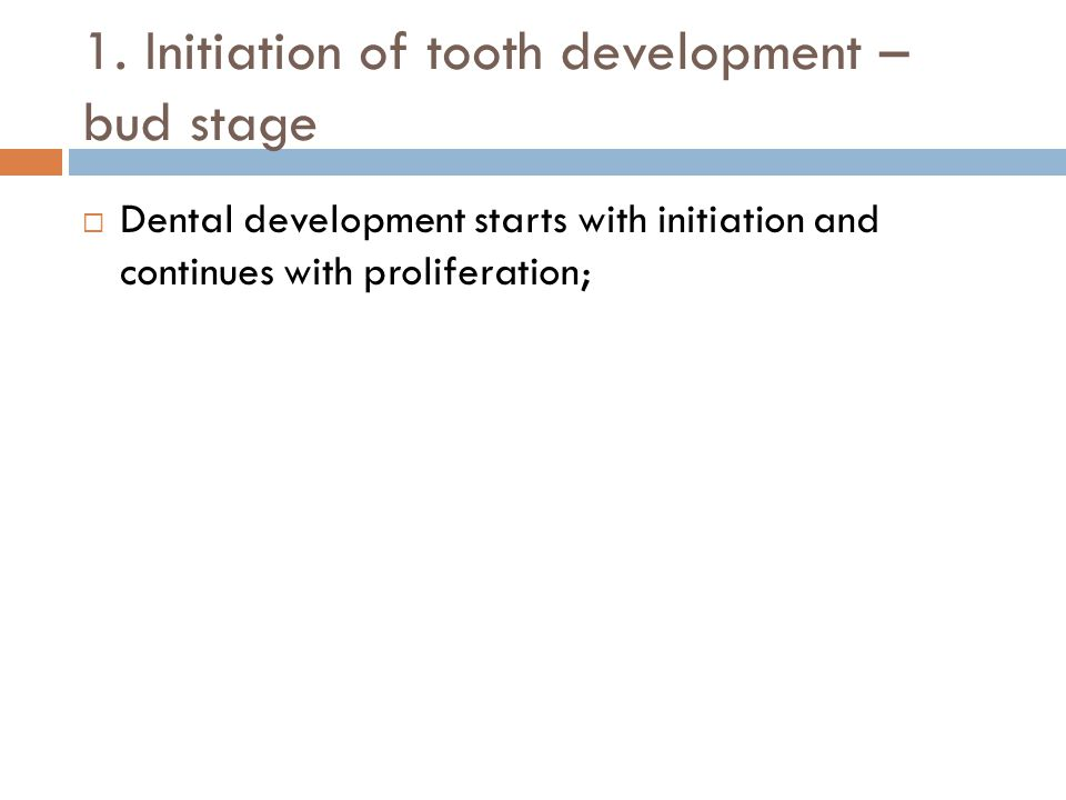 1. Initiation of tooth development – bud stage