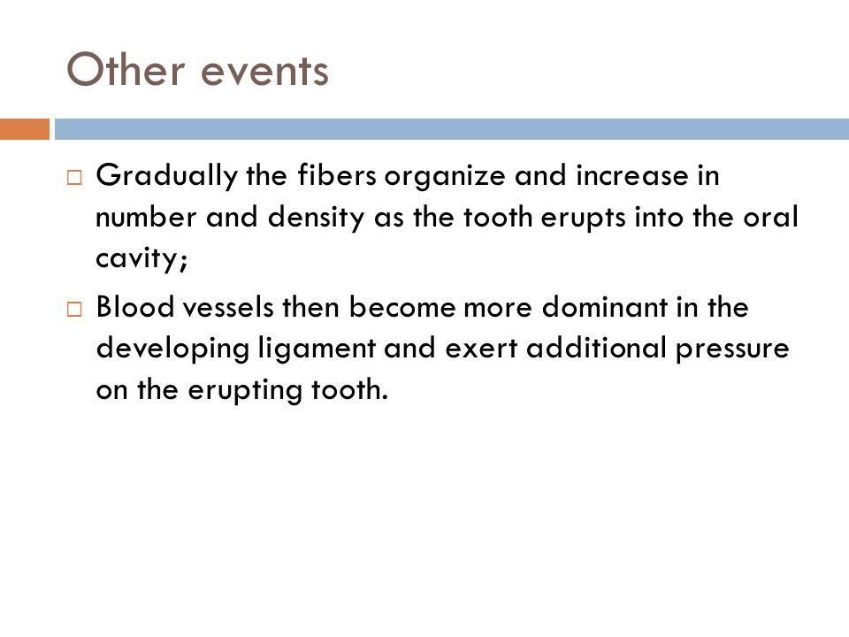Other events Gradually the fibers organize and increase in number and density as the tooth erupts into the oral cavity;