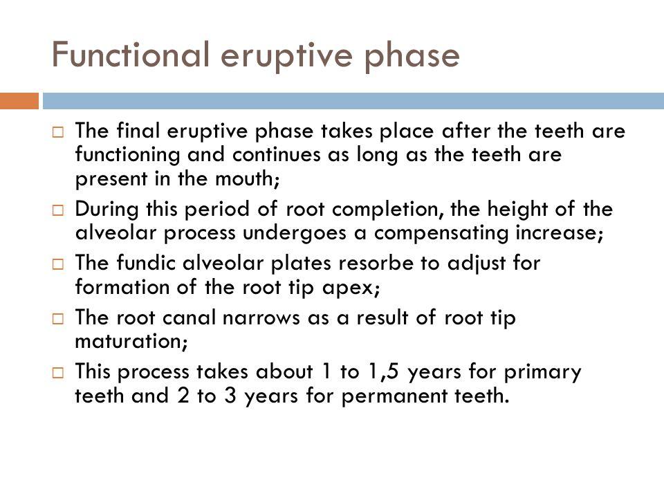 Functional eruptive phase