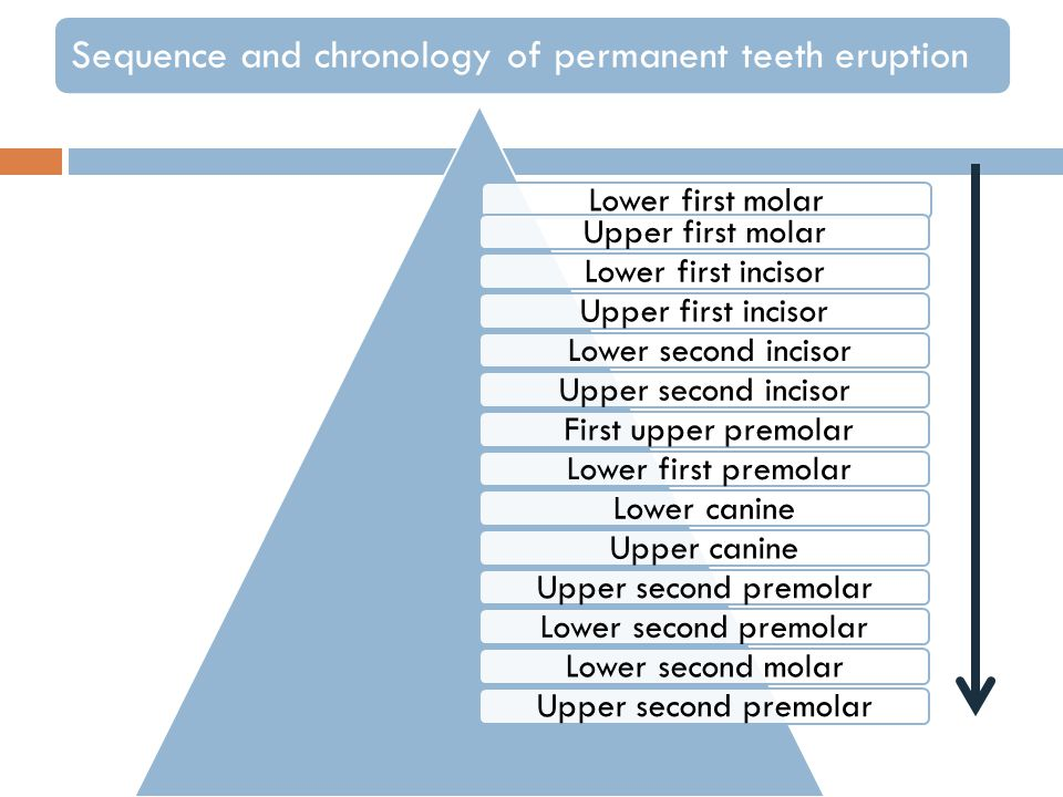 Lower first molar Upper first molar Lower first incisor