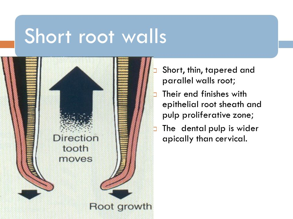 Short, thin, tapered and parallel walls root;