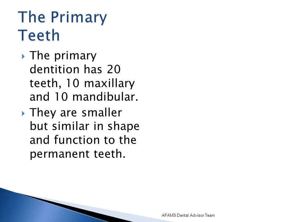 The Primary Teeth The primary dentition has 20 teeth, 10 maxillary and 10 mandibular.