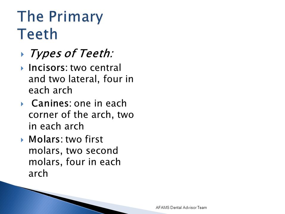 The Primary Teeth Types of Teeth: