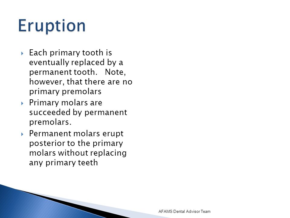 Eruption Each primary tooth is eventually replaced by a permanent tooth. Note, however, that there are no primary premolars.