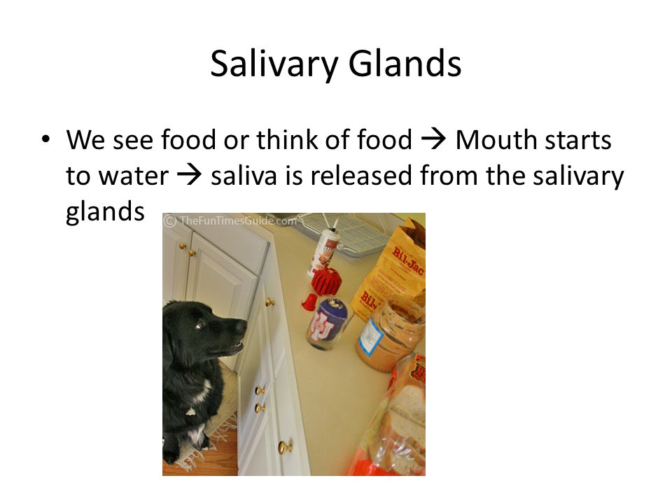 Salivary Glands We see food or think of food  Mouth starts to water  saliva is released from the salivary glands.