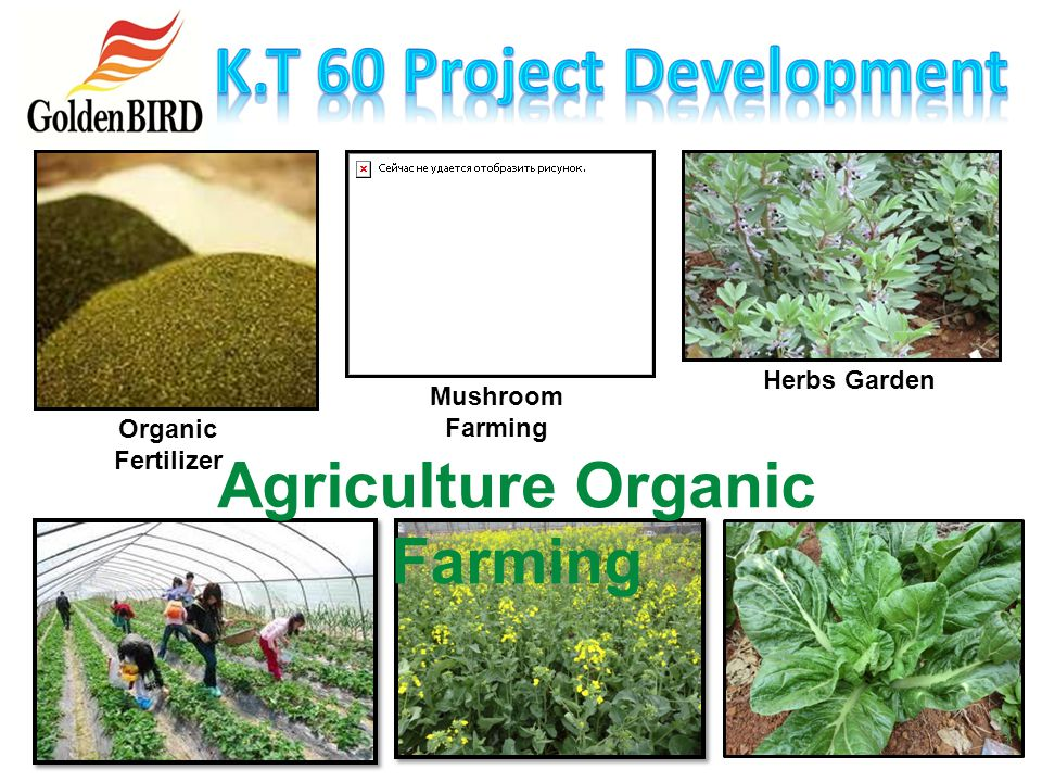 K.T 60 Project Development Agriculture Organic Farming