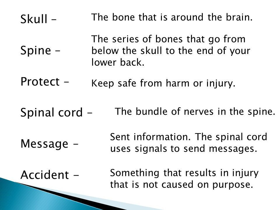 Skull – Spine – Protect – Spinal cord – Message – Accident -