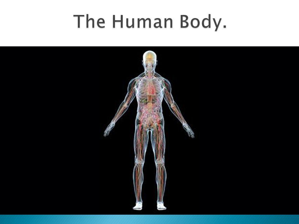 The Human Body.