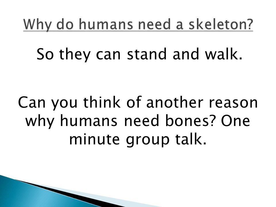 Why do humans need a skeleton