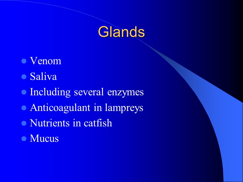 Glands Venom Saliva Including several enzymes
