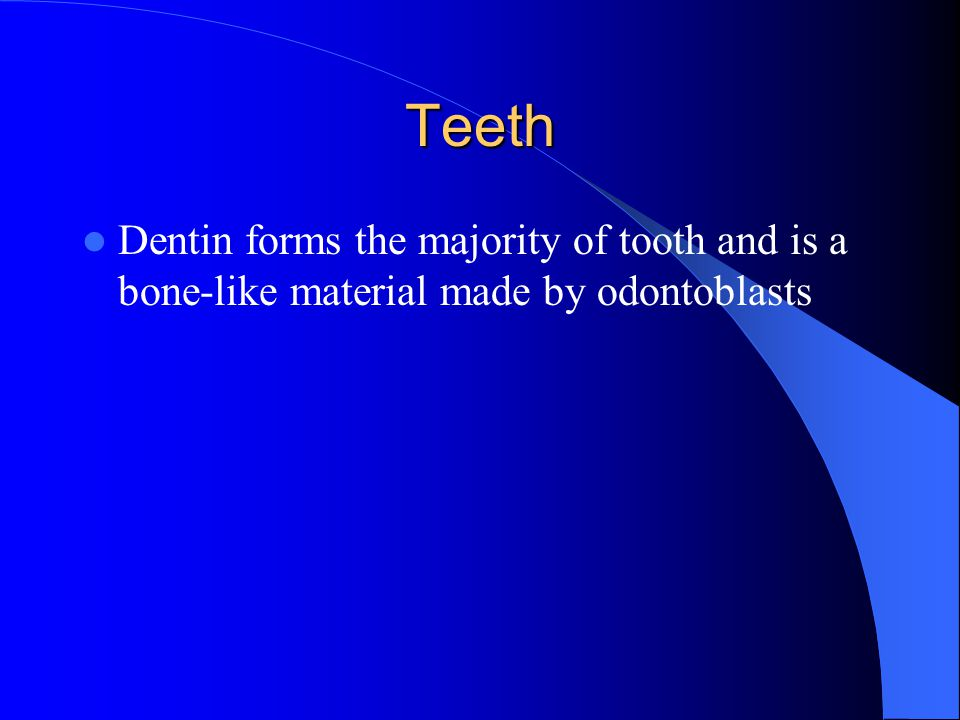 Teeth Dentin forms the majority of tooth and is a bone-like material made by odontoblasts