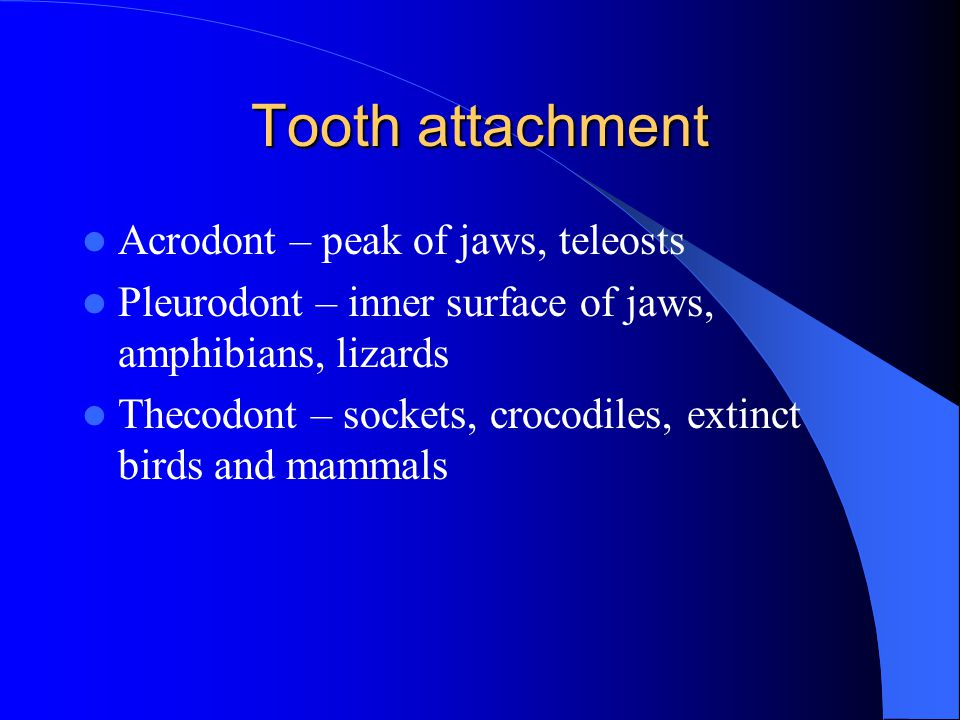 Tooth attachment Acrodont – peak of jaws, teleosts