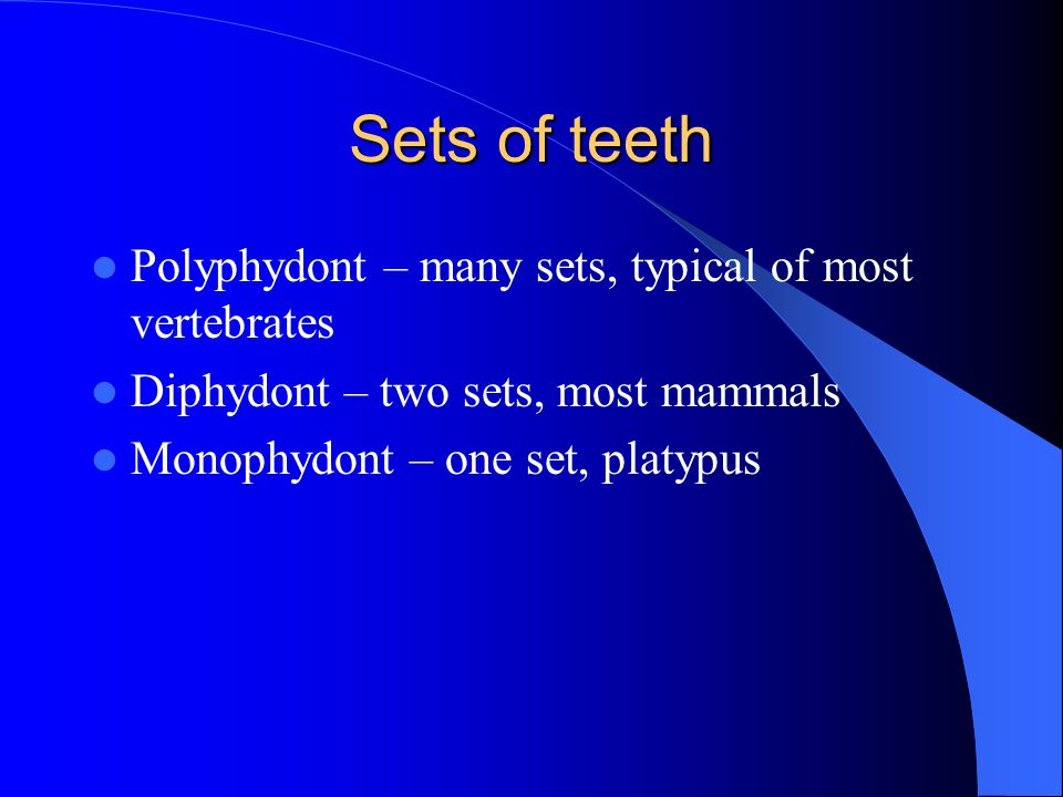 Sets of teeth Polyphydont – many sets, typical of most vertebrates