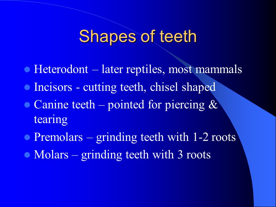 Shapes of teeth Heterodont – later reptiles, most mammals