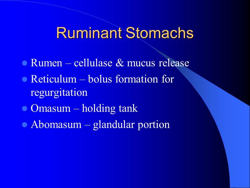 Ruminant Stomachs Rumen – cellulase & mucus release