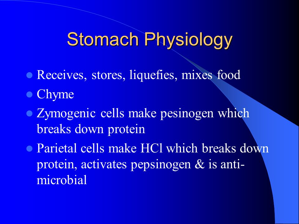 Stomach Physiology Receives, stores, liquefies, mixes food Chyme
