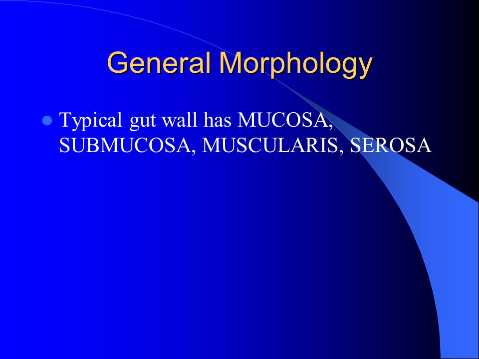General Morphology Typical gut wall has MUCOSA, SUBMUCOSA, MUSCULARIS, SEROSA