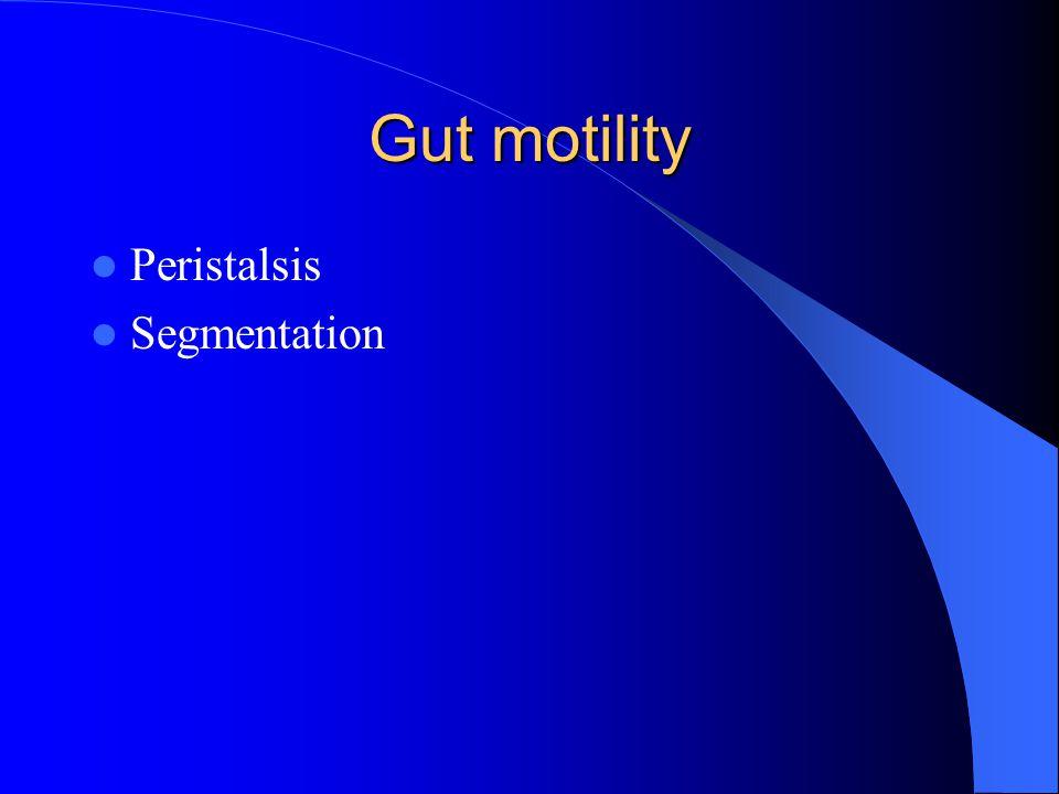 Gut motility Peristalsis Segmentation