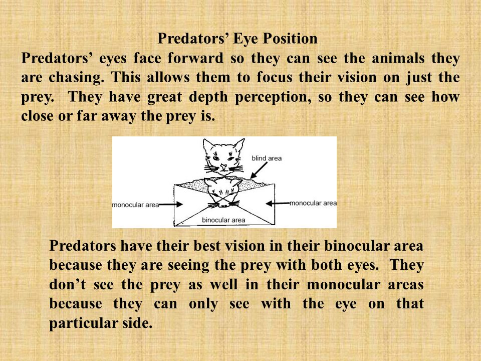Predators' Eye Position