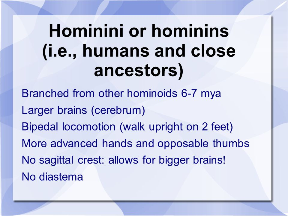 Hominini or hominins (i.e., humans and close ancestors)